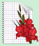 Page of a notebook with gladiolus (vector). Red flower and page of a writing-book. Congratulations and wishes. Celebratory illustration for cards, drawing up of Stock Image