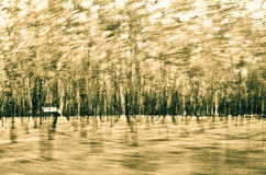Page scary forest plantations royalty free stock photography