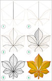 Page shows how to learn step by step to draw a chestnut leaf. Royalty Free Stock Images