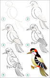 Page shows how to learn step by step to draw a woodpecker. Royalty Free Stock Photos