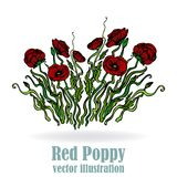 Page template for web and print white background with red bouquet of poppies elegant with poppy flowers. Page template for web and print  white background with stock illustration