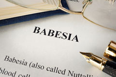 Page with title babesia. royalty free stock images