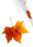Pages d'automne Images stock