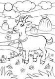 Pages de coloration animaux Petite chèvre mignonne Photo libre de droits