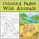 Pages de coloration : Animaux sauvages Sourire mignon de trois petit meerkats illustration libre de droits