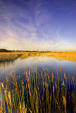 Pagham Harbour, West Sussex Stock Image