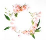 Pagina con alstroemeria, le foglie ed i petali su fondo bianco Fotografia Stock Libera da Diritti