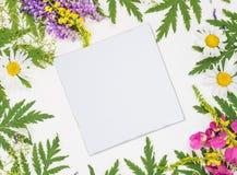 Pagina con differenti erbe e fiori Immagini Stock Libere da Diritti