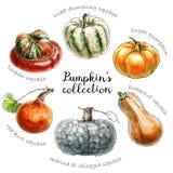 Pagina con differenti pomodori di varietà royalty illustrazione gratis