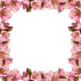 Pagina con i fiori della pesca Fotografia Stock