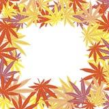 Pagina con i fogli colorati della marijuana Fotografie Stock