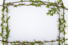 Pagina con i rami verdi del salice su un fondo bianco Spazio della copia nel mezzo per il vostro testo fotografie stock libere da diritti