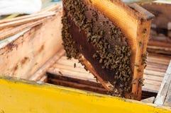 Pagina con il favo con le api sopra l'alveare Immagine Stock