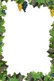 Pagina con l'uva Immagini Stock Libere da Diritti