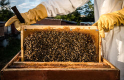 Pagina con le api Fotografia Stock Libera da Diritti