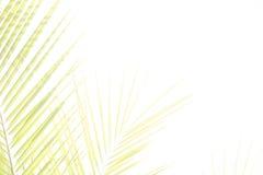 Pagina con le foglie di palma Fotografia Stock