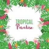 Pagina con le foglie ed i fiori tropicali esotici illustrazione vettoriale