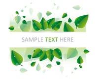 Foglie fresche di verde Fotografie Stock Libere da Diritti
