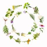 Pagina con le piante curative, isolate Immagine Stock