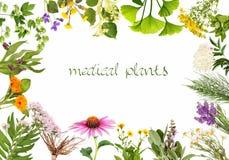 Pagina con le piante medicinali, isolate Immagini Stock