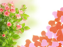 Pagina con rose e forma dei cuori Fotografia Stock