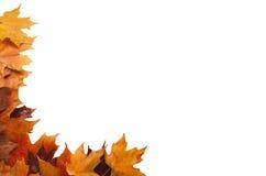 Pagina d'angolo delle foglie di acero di autunno Fotografia Stock
