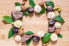 Pagina dagli elementi di autunno: castagna, corteccia, fiori secchi Fotografie Stock
