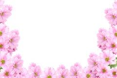 Pagina dai fiori Fotografie Stock