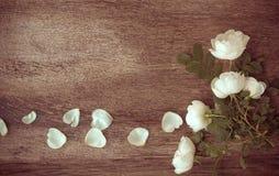 Pagina dai fiori su fondo di legno invecchiato Fuoco selettivo P Immagini Stock