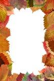 Pagina dai fogli di autunno Fotografia Stock