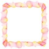 Pagina dai petali di rosa Fotografia Stock