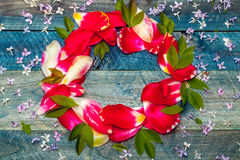Pagina dai petali variopinti del tulipano Fotografia Stock