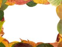 Pagina dalle foglie Fotografia Stock