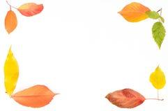 Pagina dalle foglie Immagine Stock