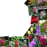 Pagina dalle foto dei fiori Fotografia Stock