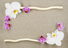 Pagina dalle orchidee e da due bastoni su un fondo beige del tessuto immagini stock