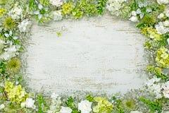 Pagina dei fiori Fotografia Stock Libera da Diritti