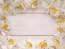 Pagina dei fiori bianchi e gialli di alstroemeria Immagine Stock Libera da Diritti