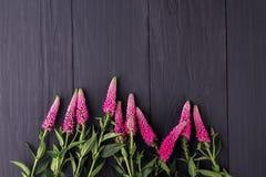 Pagina dei fiori, bordi neri del fondo fotografia stock