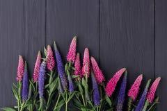 Pagina dei fiori, bordi neri del fondo immagine stock libera da diritti