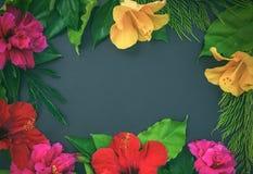 Pagina dei fiori, degli ibischi, delle rose di dof e delle foglie verdi o Immagini Stock