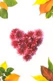 Pagina dei fiori e delle foglie Fotografia Stock