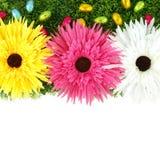 Pagina dei fiori e delle uova di Pasqua Immagini Stock