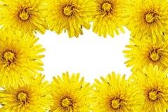 Pagina dei fiori gialli fotografie stock