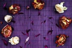 Pagina dei fiori secchi Fotografia Stock Libera da Diritti