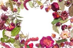 Pagina dei fiori secchi, del rosa, delle rose rosse e delle foglie verdi su un wh Fotografia Stock