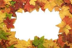Pagina dei fogli di autunno Fotografia Stock