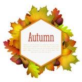 Pagina dei fogli di autunno Fotografie Stock