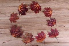 Pagina dei fogli di autunno Fotografia Stock Libera da Diritti
