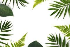 Pagina dei fogli verdi Fotografie Stock